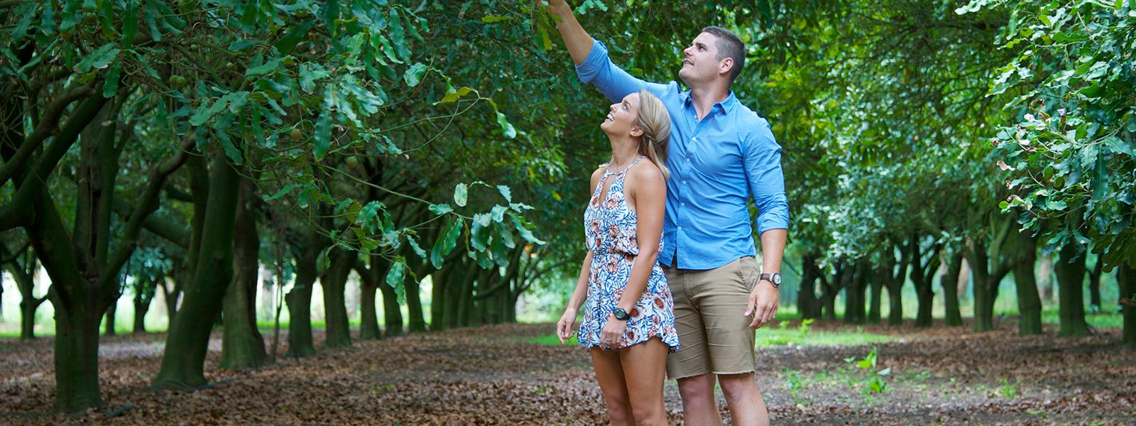 Medowie Macadamias :: Port Stephens